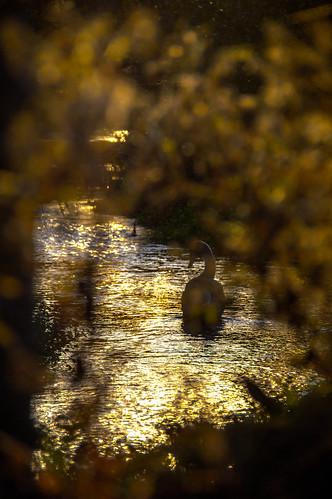 sunset sun halloween hampshire explore ever sets uks the warmest iexplore iniexplore