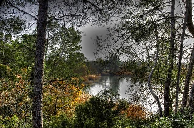 vue atravèrs les arbres