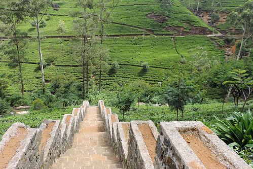 travel ceylon srilanka southasia asia nuwaraeliyadistrict ramboda teafactory teaproduction tea mackwoodslabookellieteafactory labookellietea dnysmphotography dnysmsmugmugcom