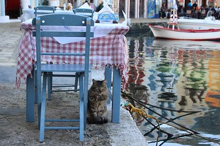 cat-under-table | by anywhereism