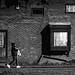 Window box by Dries V