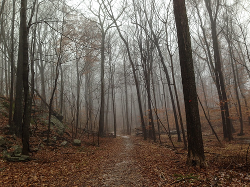 trees ny newyork fog forest woods path trail westchestercounty iphone southsalem lewisboro leonlevypreserve