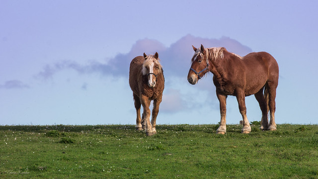 Two horses...