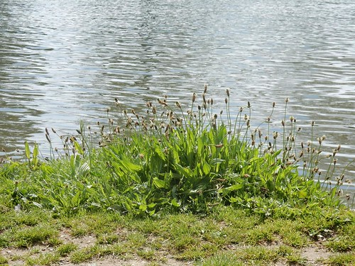 Plantain-on-Thames Marlow Circular