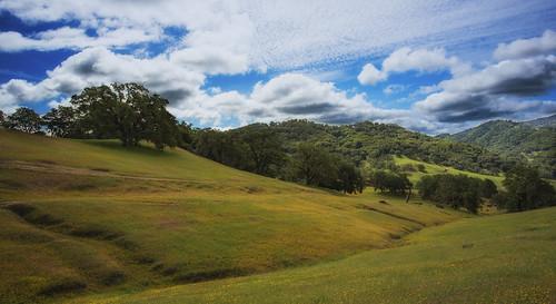 Anderson Valley, N. California