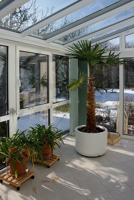 Wintergarten (VI)