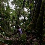 01 Viajfilos en Panama. Sendero Quetzal 51
