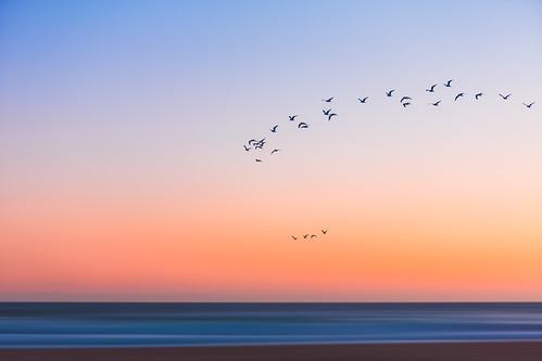 ocean sunset sea sky beach birds twilight dusk flight