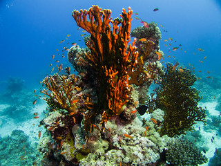 Red Sea 2014-30 | by paul_a_williams