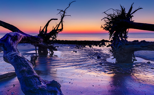 color beach nature water silhouette canon landscape coast spring twilight sand driftwood bluehour jekyllisland boneyardbeach