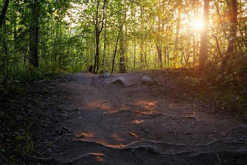 sunset green nature yellow forest 35mm suomi finland photography lights amazing nikon path stones photowalk f18 jyväskylä d3100