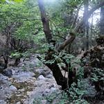 5 Viajefilos en Creta, Omalos-Sougia 08