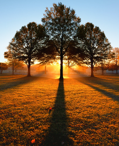autumn trees shadow 3 fall yellow sunrise golden three symmetry balance triple alignment