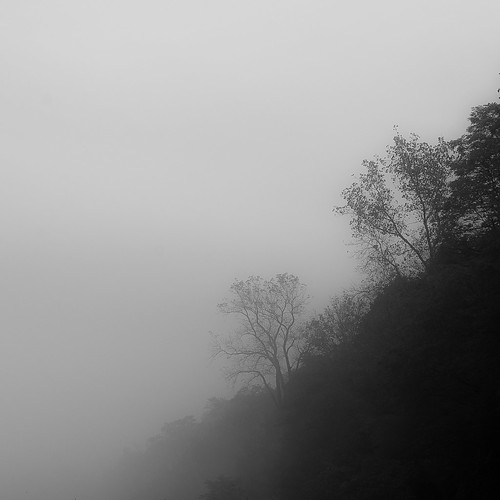 d5000 nikon abstract autumn beach blackwhite bw fog foggy forest lake landscape light minimal minimalism monochrome natural noahbw peaceful quiet shore shoreline square still stillness trees water woods blackandwhite lakesidefog