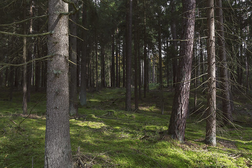Wald | by David Schiersner