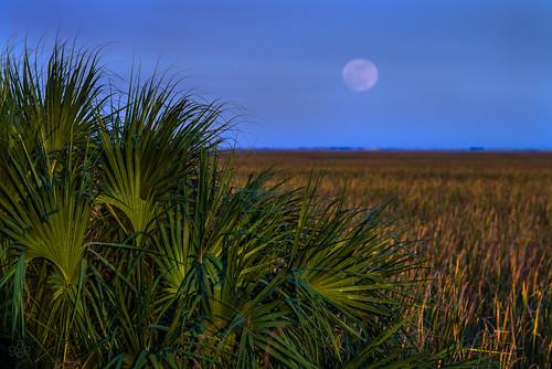 december unitedstates florida fav20 fortlauderdale fav30 fav10 sawgrassrecreationpark fullmoonrise uscopyrightregistered2013
