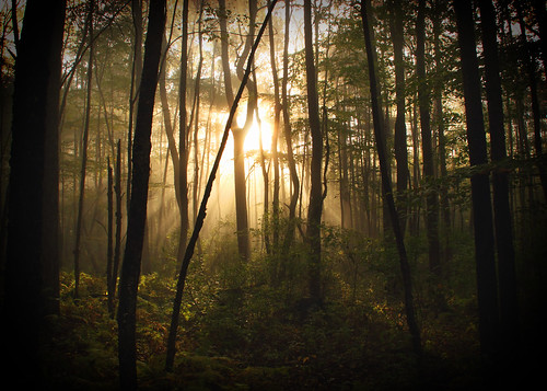 fog forest sunrise pennsylvania pa national allegheny tidioute nwpa pawilds