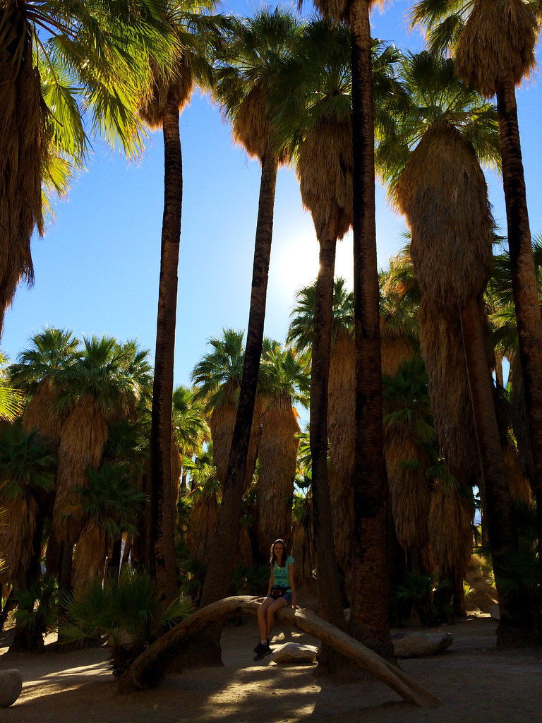 Indian Canyons, Palm Springs, CA