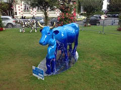 Cow parade Deauville