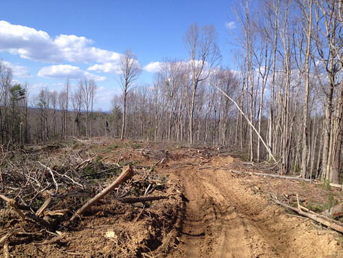 The homesite area with timber harvest nearly finished