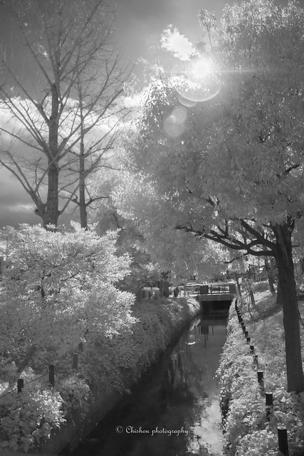 Like snow~infrared photography