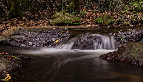 morans creek lamington national park queensland australia rainforest south east water running