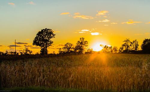 """An Autumn sun sets over a cornfield"" | by NetReacher Image Studios"
