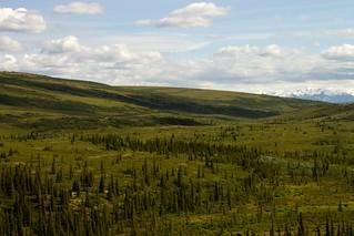 Tundra (Alaska Range in Background) | by bbum