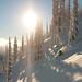 Kanada je pověstná lyžováním v lese. Každoročně tady spadne takové množství sněhu, že nepozorným lyžařům hrozí nebezpečí pádu do tzv. Tree Well, stromové studny - těsného okolí stromů, kudy lze propadnout až ke kořenům. Záchranná akce zpravidla vypadá dost komicky. Pokud ale takovému lyžaři nepomůže kamarád, nikoli výjimečně končí pád do tree well tragicky., foto: freeridecamps.cz