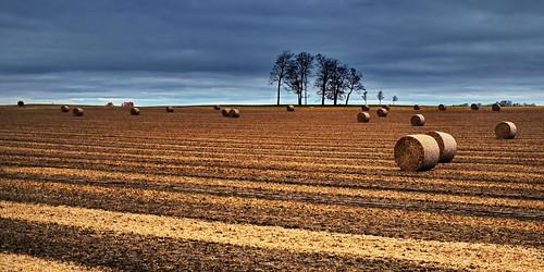 autumn trees ontario field rural farmland hay southgate explored
