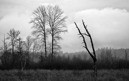 blackandwhite nature trees moody overcast clouds landscape canoneos5dmarkiii canonef100400mmf4556lisusm nisquallynationalwildliferefuge pacificnorthwest monochrome washington