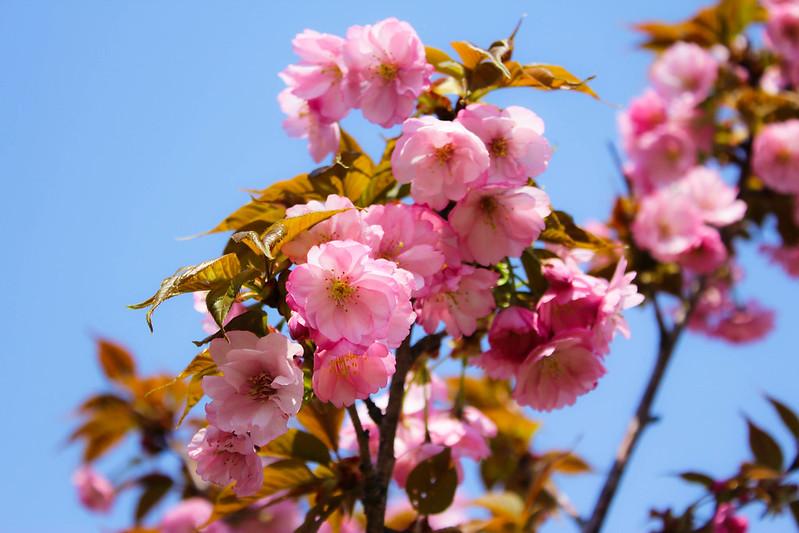 2014-04-19_00251_美の山.jpg