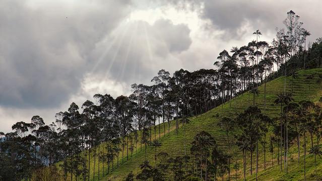 En Las Alturas De La Cordillera Central