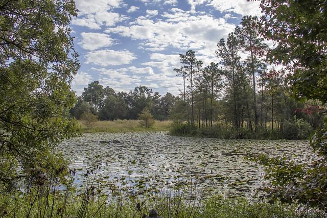 Houston Arboretum and Nature Center_28