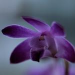 flower 228
