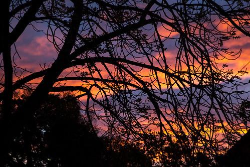 morning sky tree sunrise tasmania hobart