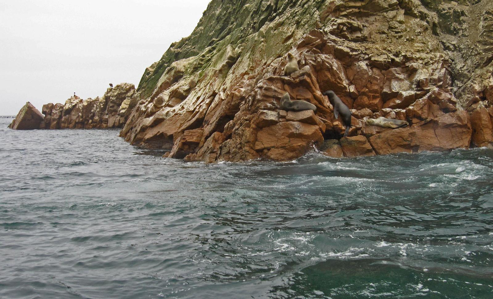 Islas Ballestas 94