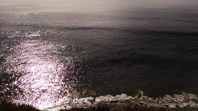 VID_20150107_113037763 pelican cruising beach