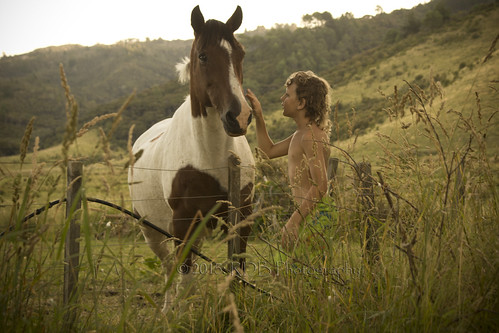 The Horse and His Boy 1