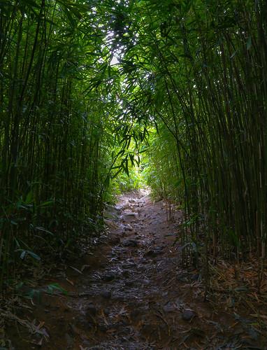 trees green forest hawaii highway tunnel maui bamboo hana eos6d canon6d parksjd