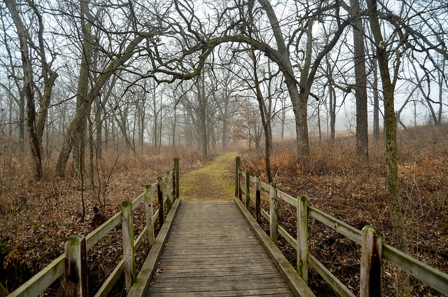 Foggy Forest Preserves 41