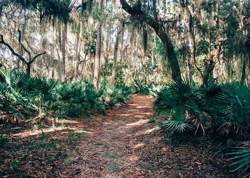wild nature forest woods nikon raw florida trail wilderness naturalbeauty ocalanationalforest lightroom floridastatepark d90 wildflorida silverglensprings nikond90 naturalflorida vsco lakegeorgetrail vscofilm