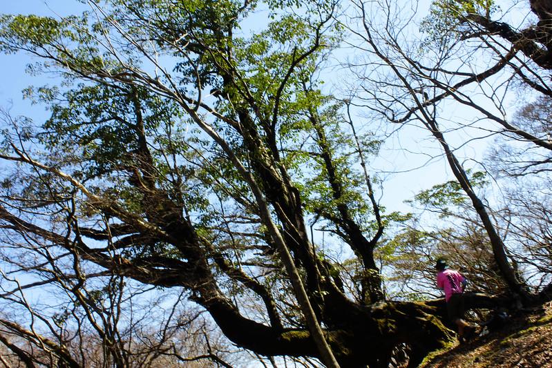 2014-03-31_00122_伊豆稜線トレイル.jpg
