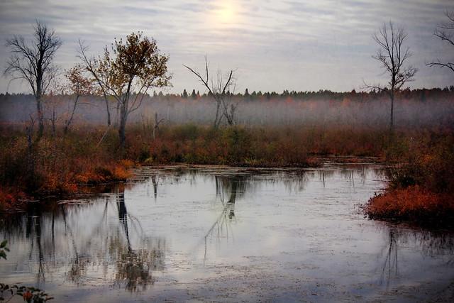 Morning in the Marsh
