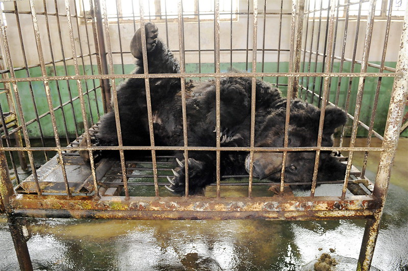 Oliver was found broken in Shandong in 2010 (1)