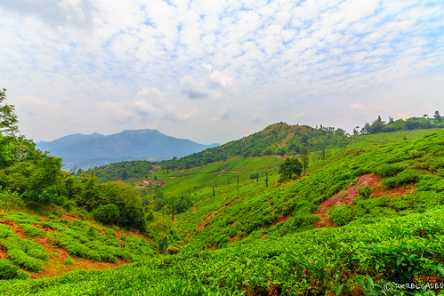 sky green clouds landscape estate tea peak plantation chembra wayanad