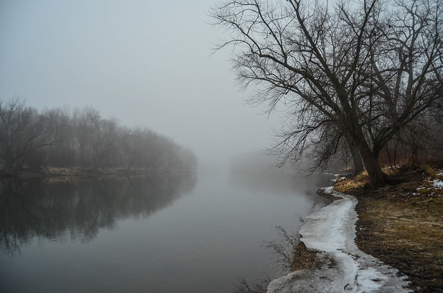 Foggy Forest Preserves 7