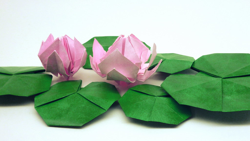 waterlily.gif | Origami lily, Origami flowers instructions ... | 576x1024