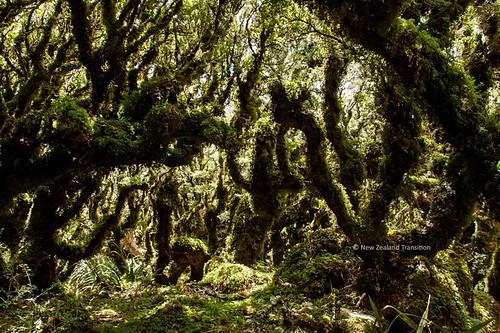 goblin forest, Tararua Forest Park.