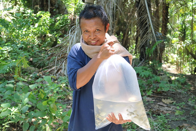 Distribution of GIFT fingerlings, Timor-Leste. Jharendu Pant, 2016.